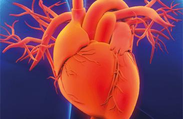 Medicina cardiovascular